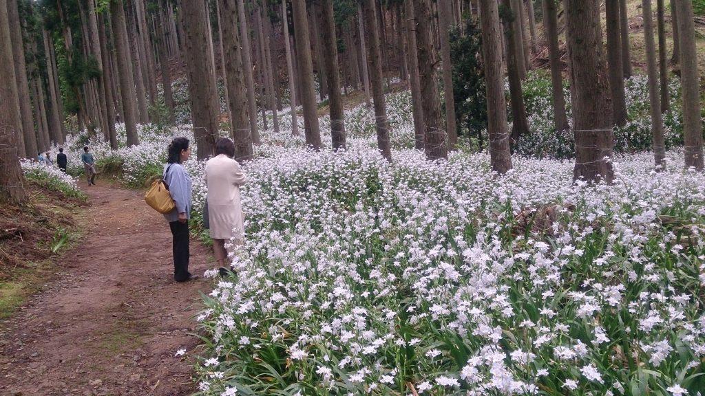 シャガの咲く市茅野の里山